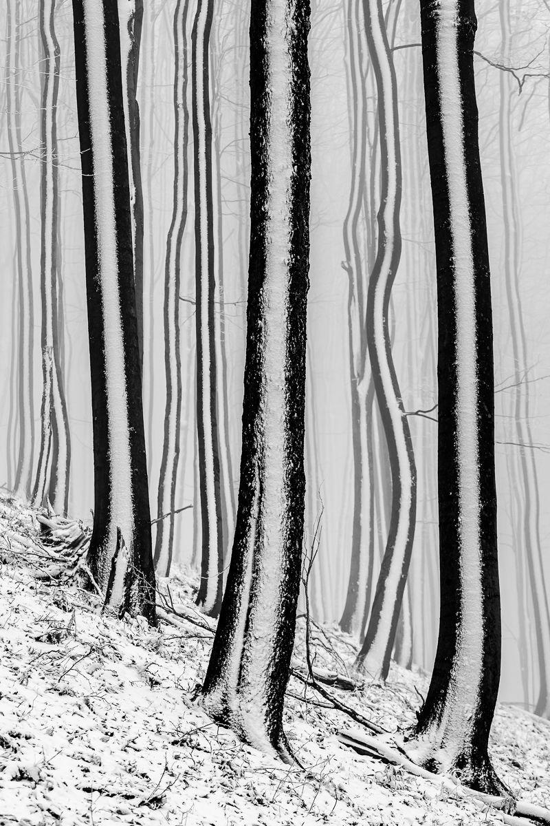 Les pod Radhošťom
